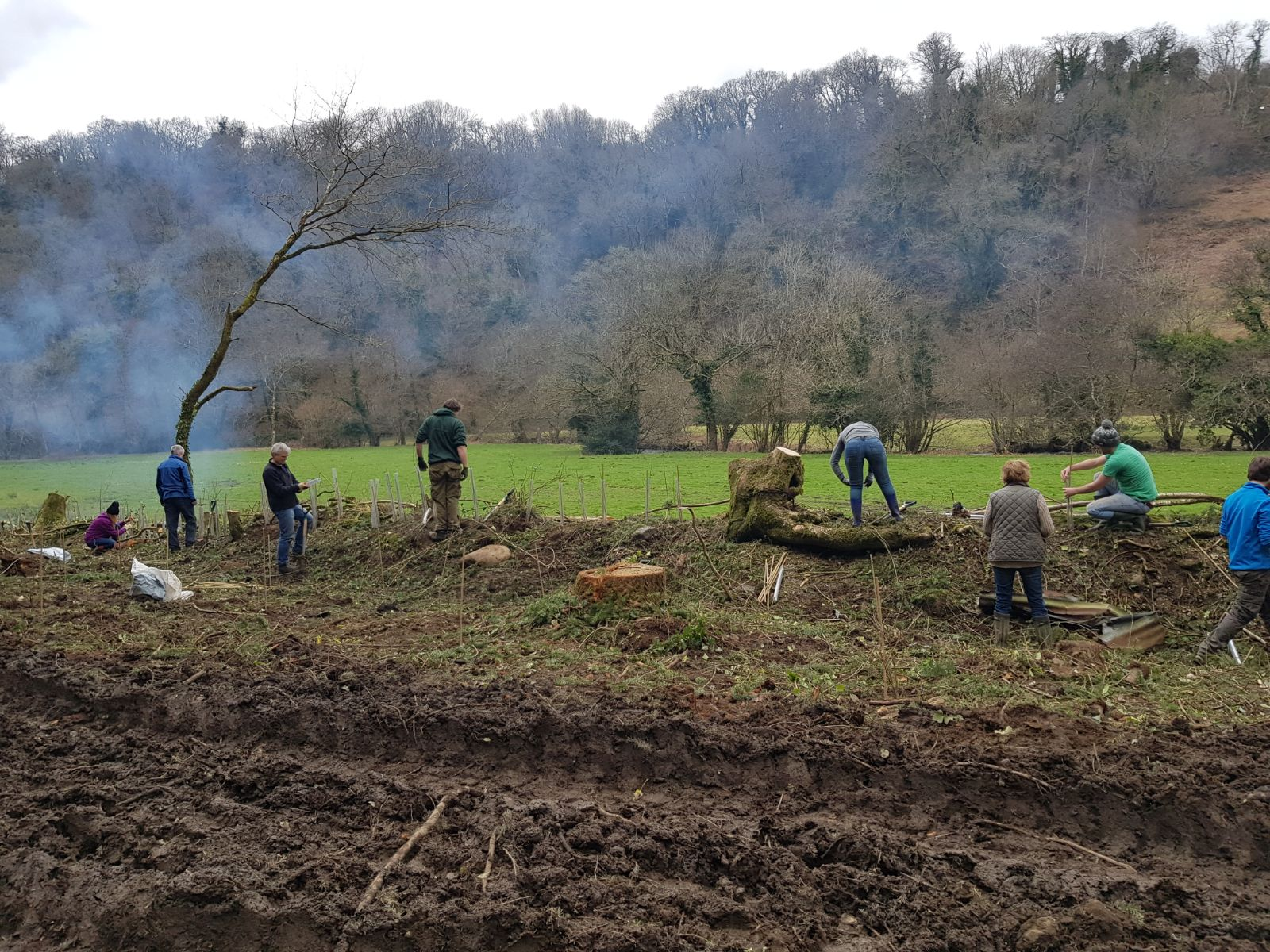 Premier Paper helps develop ancient woodland by planting 800 trees